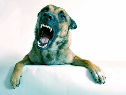 Most dogs never hurt anyone, but sometimes a dog may bite out of the blue and injure you or a loved one. Contact the Louisiana SPCA to learn how to properly train your dog. Contact a Shreveport Dog Bite Lawyer if a dog has attacked you or your child.